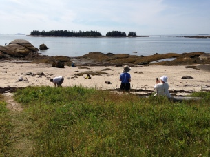 Collecting at Meadow Beach. Deer Isle. Kelly Knight, Fiber Artist.